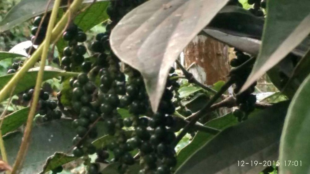 Natural Black Pepper Spices