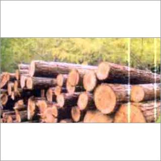 Timber birch