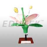 Flower Model