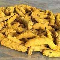 Long Pale FAQ Turmeric finger price