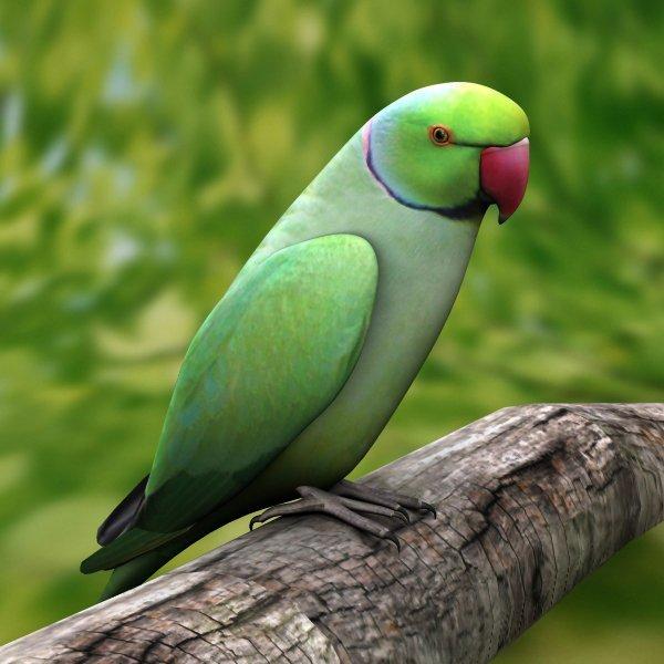 Parrot Breeder Feed
