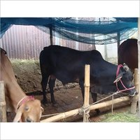 High Energy Cattle Feed