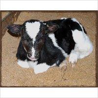 Calf Grower Feed