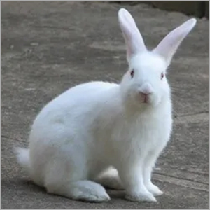 Rabbit Feed