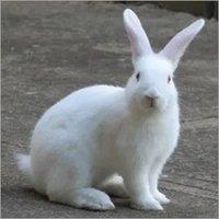 Rabbit Feed Pellets