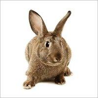 Breeding Rabbit Feed