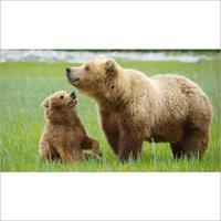 Bear Feed