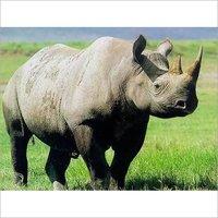 Rhinoceros Feed