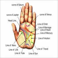 Palm Reading Services