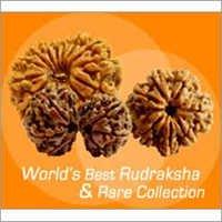 Rudrakshas