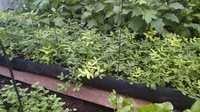 Garden Grow Troughs