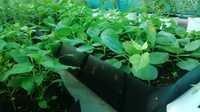 Grow Troughs