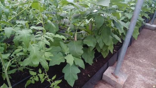 Vegetable Growing Troughs