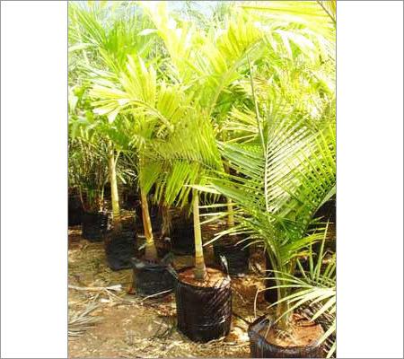 Tree Planting Bags
