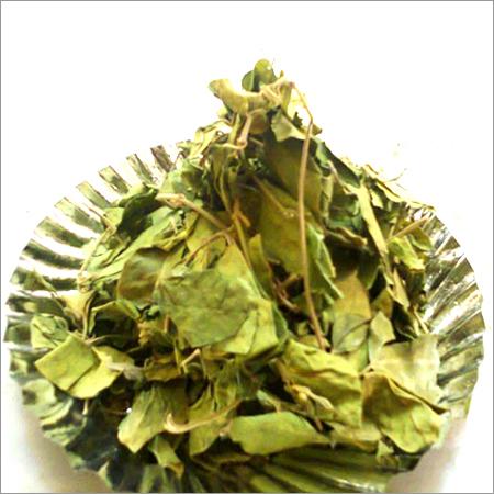 Gymnema Sylvestre Dried Leaves
