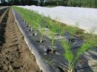 Geotextile For Agriculture
