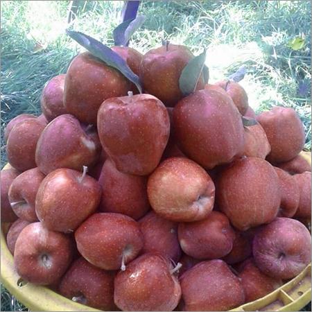 Fresh Apple Fruits