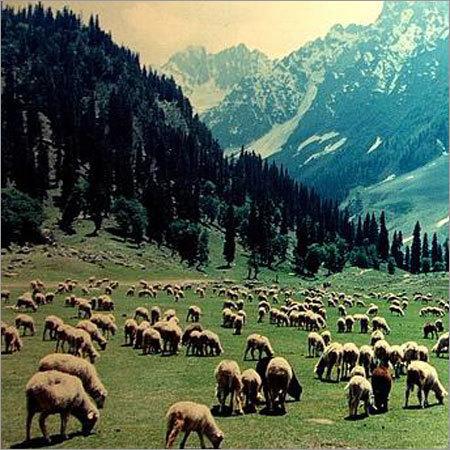 Kashmir Sonmarg Tour