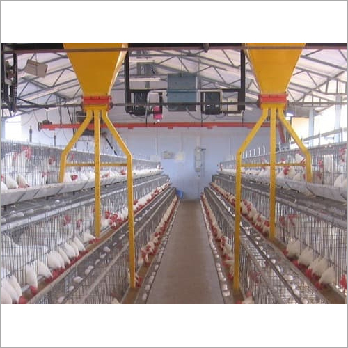 Automatic Poultry Farm Equipments