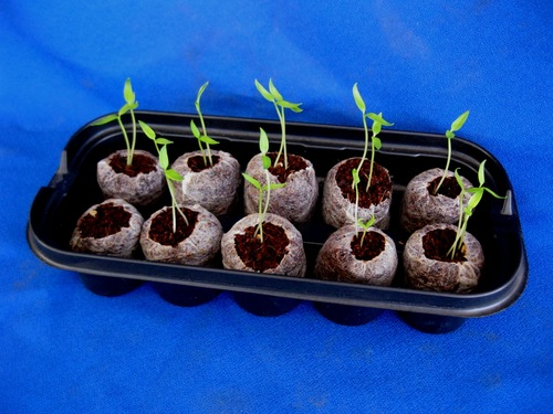 Easy 10 - Germination Starter Kit (3)