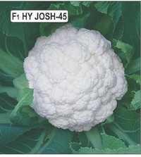 Cauliflower Josh 45 Seeds