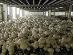 Mushroom Farming Unit