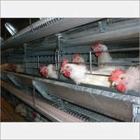 Poultry Breeder Battery Cages