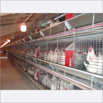 Automated Battery Cages