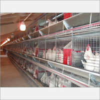 Automated Battery Cage System