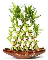 5 Layer Pyramid Shape Bamboo