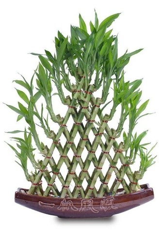 8 Layer Pyramid Shape Bamboo