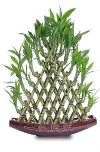8 Layer Pyramid Shape Bamboo