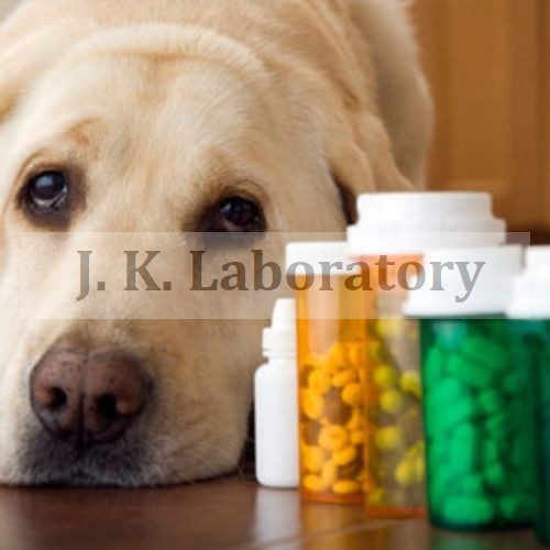 Pet Food Testing Services