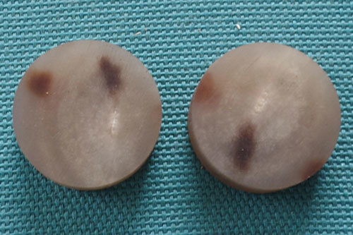Cow Horn Button Blanks