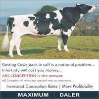 HF Bull Semen from ABS