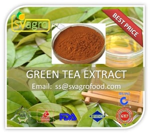 Herbal Green Tea Extract For Natural Supplements