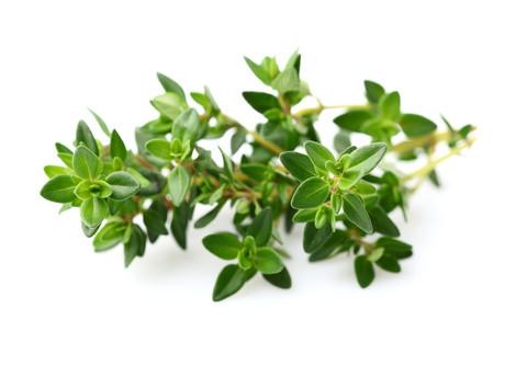 Thyme Oil (Thymol >30%)