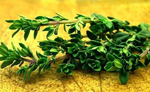Thyme Oil (Thymol > 60%)