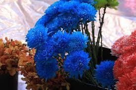 Natural Blue Hydrangea Flower