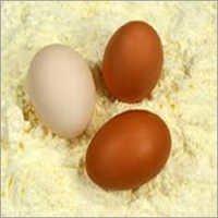 Whole Egg Powder