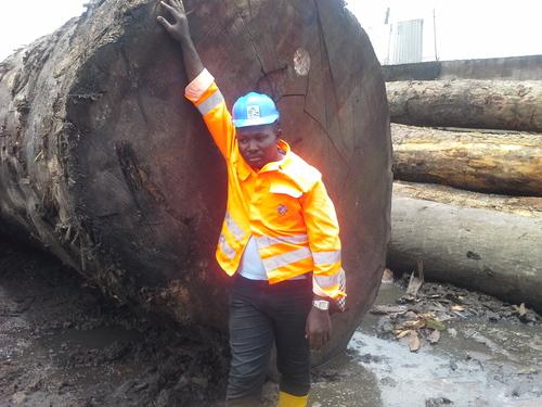 Wood Log Timber