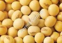 Soya Bean Carrier Oil