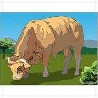 Cattle Semen