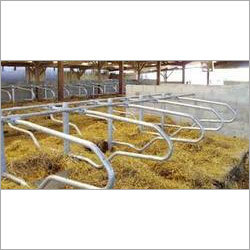 Cattle Cubicle Housing