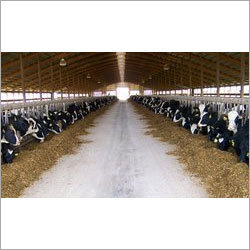 Dairy Farming & Design Consultants Services
