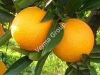 Therapeutic Orange Oil