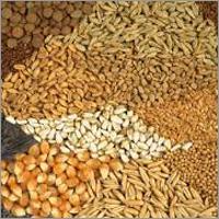 Indian Food Grains