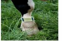Cow Gps Tracker