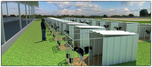 Dairy Farm Setup