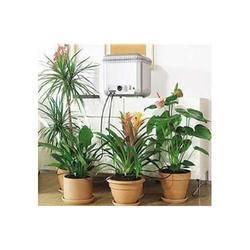 Live Indoor Plant
